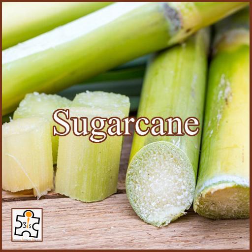 Sugarcane EB