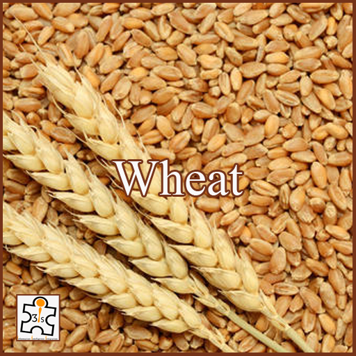 Wheat EB