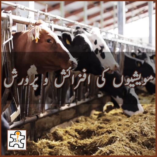 مویشیوں کی افزائش و پرورش